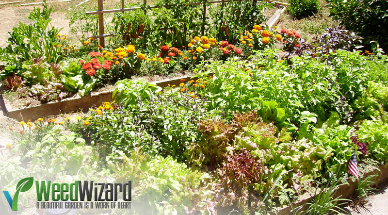 A Word Of Advice For A Rewarding Backyard Gardening Experience U2013 Weed Wizard
